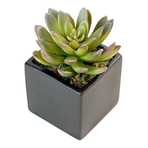 Small Faux Succulent in Square Black Ceramic Pot - 5 x 4 Inches - Marmalade Floral Accents Artificial Echeveria in Matte Planter - Modern Potted Plant Decor for Home or Office - Contemporary Plant Pots