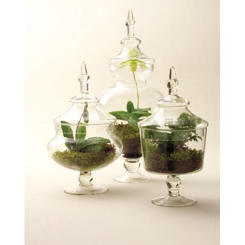 Two's Company Chateau Botanical Jars, Set of 3 by Two's Company