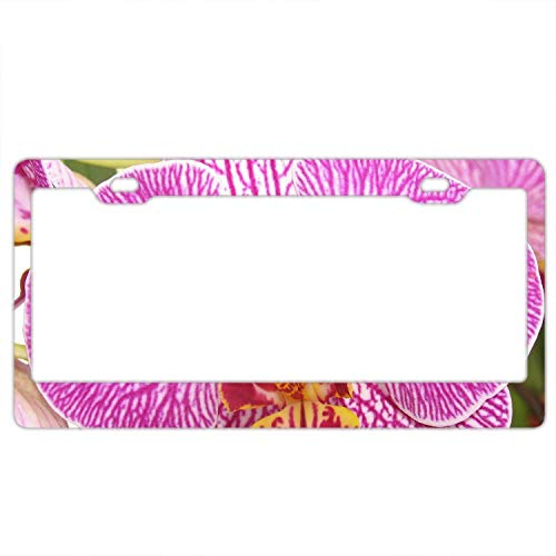 Abstract Orchid - YEX Abstract Orchid Phalaenopsis Purple Flower License Plate Frame Car Tag Frame Auto License Plate Holder 12