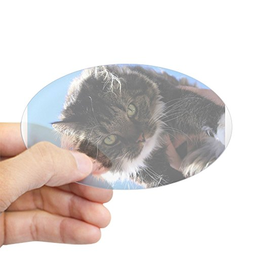 Kitty Own (CafePress - Kitty Owns You Oval Sticker - Oval Bumper Sticker, Euro Oval Car Decal)