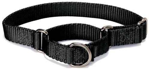 Most bought Dog Slip & Martingale Collars