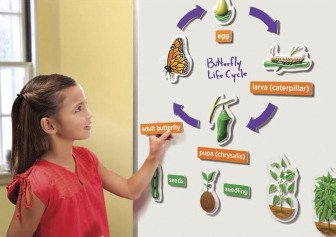 Educational Insights 3D Life Cycles Demonstration Magnets