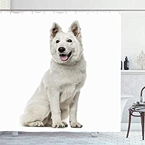 Ahawoso Shower Curtain 72x78 Berger White Shepherd Dog Sitting Animals Out Wildlife Blanc Isolated Suisse Canine Carnivore Cut Waterproof Polyester Fabric Bathroom Bath Decor Set with Hooks 4