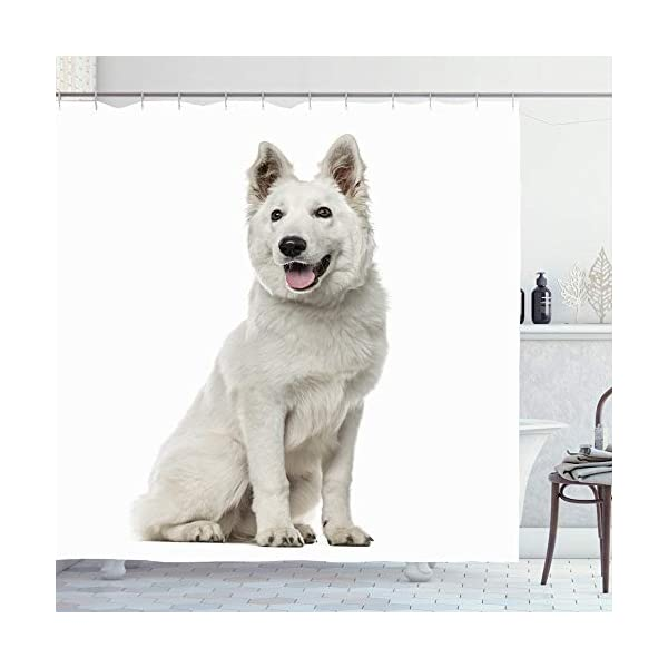 Ahawoso Shower Curtain 72x78 Berger White Shepherd Dog Sitting Animals Out Wildlife Blanc Isolated Suisse Canine Carnivore Cut Waterproof Polyester Fabric Bathroom Bath Decor Set with Hooks 1