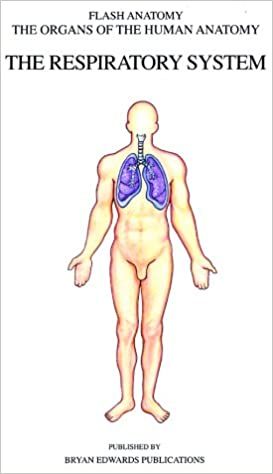 The Respiratory System Organs Of The Human Anatomy Systems Of