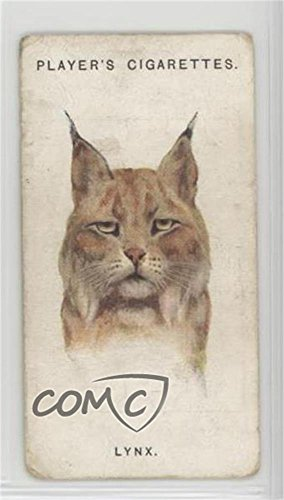 The Lynx Ungraded COMC Good to VG-EX (Trading Card) 1931 Player's Wild Animals' Heads by Arthur Wardle - [Base] #36 from Unknown
