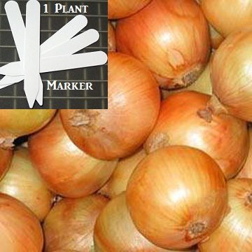 Heirloom Sweet Spanish Yellow Onion Seeds 300 Seeds Upc 646263363201 + 1 Plant Marker