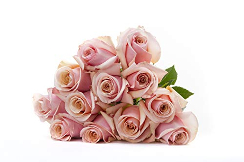 Martha Stewart Roses by BloomsyBox - One Dozen Pale Pink Mother of Pearl Roses Selected by Martha and Hand-Tied, Long Vase ()