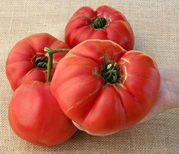 german giant tomato seeds - 9