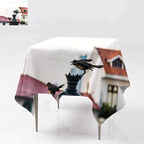 AFGG Stain Resistant Square Tablecloth,Birds Interacting in an Electric lamp - Panama City Panama,Stain Resistant, Washable,36x36 Inch
