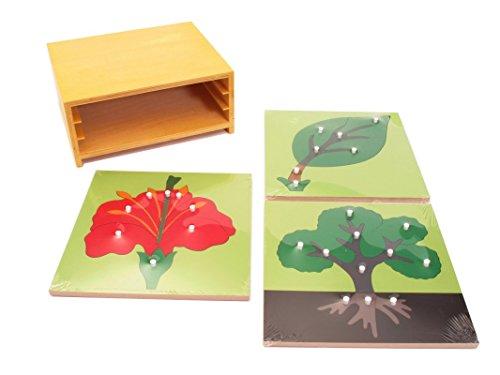 NEW Montessori 3 Botany Puzzles & Cabinet by PinkMontessori