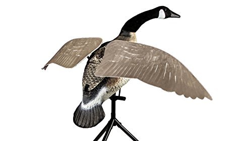 pper Canada Goose ()