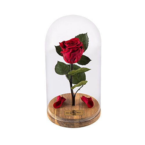 Inspired Dome (Enchanted Rose That Lasts Forever in Glass Dome Inspired by Disney Beauty and The Live Forever Rose Beast Belle by Magic Princess Whitney (Red))