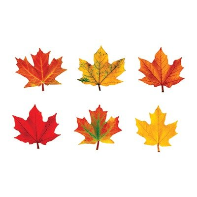 SCBT-10836-12 - CLASSIC ACCENTS MAPLE LEAVES MINI pack of 12