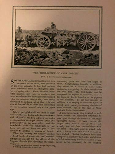(1899 South Africa Trek-Bokke of the Cape Colony)