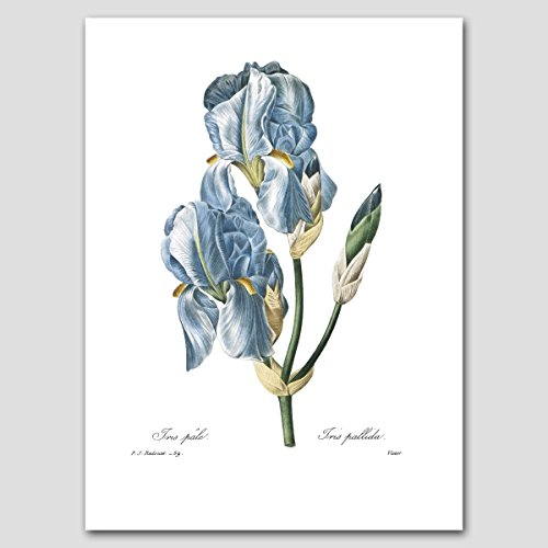 Iris Art (Blue Home Wall Decor, Spring F - Lithograph Iris Shopping Results