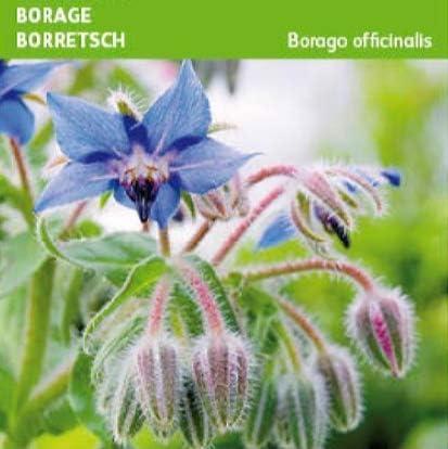 Semillas de Borraja Borago Officinalis 180 Semillas de Planta Comestible: Amazon.es: Jardín