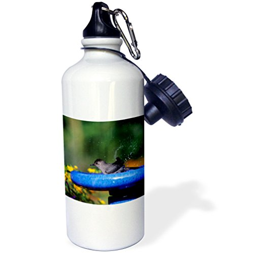 3dRose Danita Delimont - Catbird - Gray Catbird bathing in bird bath near flower garden, Illinois - 21 oz Sports Water Bottle (Near Bath)