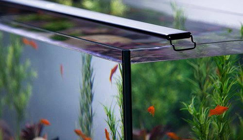 Current USA Satellite Freshwater LED Plus Light for Aquarium Review