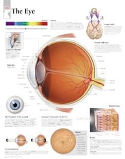 Amazon the eye anatomical chart anatomical chart company the eye chart wall chart ccuart Image collections