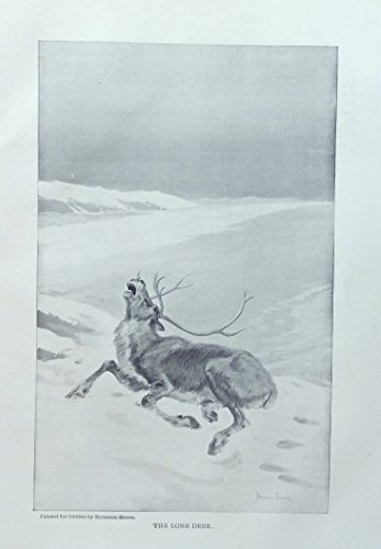 Rare 1897 Antique (Hermann Simon,1897 rare antique painting (the lone Deer) oringial 1897outing Magazine Print Art)