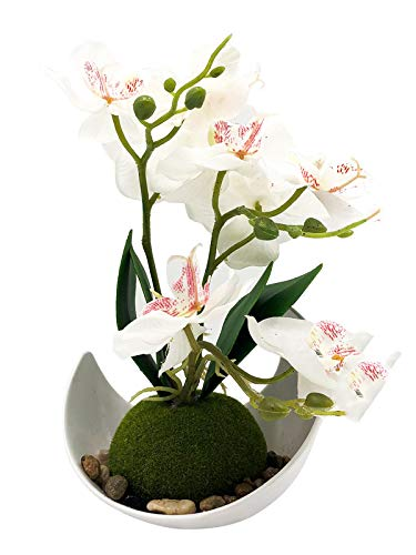 MAYCARI HOME Artificial Orchid Flower Arrangements with White Vase, Modern Artificial Flower Decoration,Plastic Flowers, Realistic & Lifelike