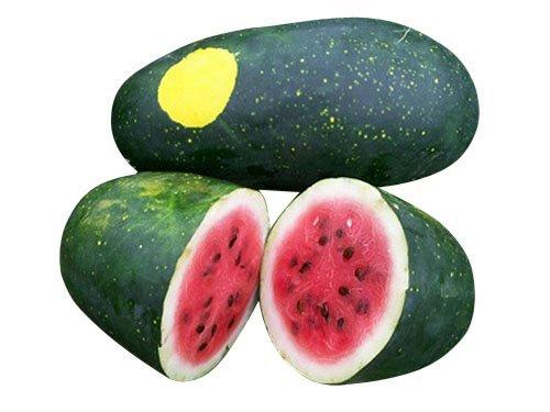 Moon & Stars Heirloom Watermelon Seeds