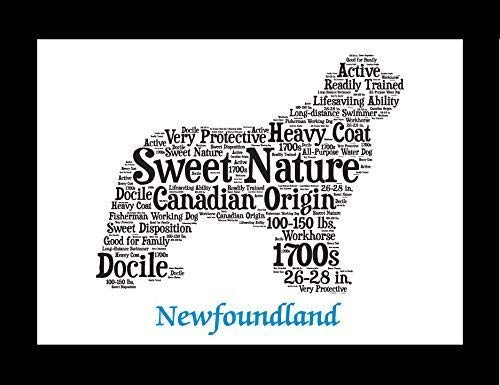 (Newfoundland Dog Wall Art Print - Personalized Pet Name - Gift for Her or Him - 11x14 matted - Ships 1 Day)