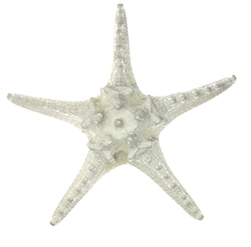 White Star Ornament (5 Extra Large Knobby Starfish - White 8-10