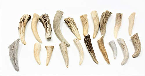 Antler Tips 20 Pack for Jewelry Earrings,Pendants,Decorative Crafts Or Flintknapping