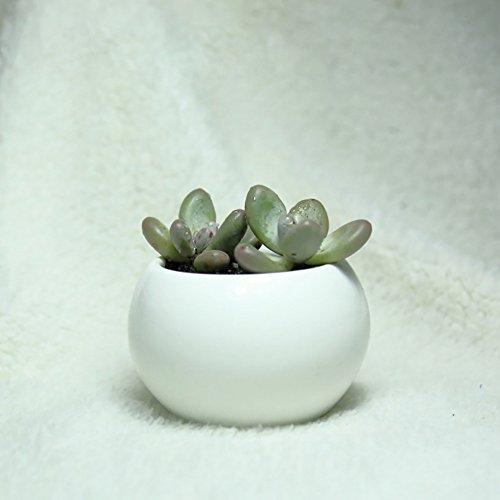 3 inch ceramic pot - 8