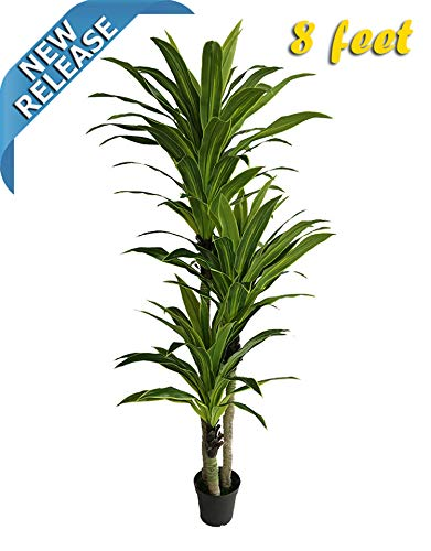 AMERIQUE Massive & Gorgeous 8' Tropical Dracaena Artificial Tree Silk Plant, UV Protection, Nursery Plastic Pot, Feel Real Technology, Super Quality, 8 Feet, Emerald Green ()