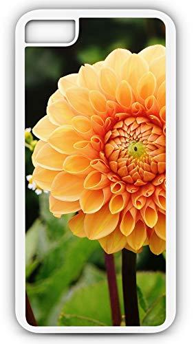 iPhone 8 Plus 8+ Case Dahlia Autumn Asteraceae Flower Dahlias Garden Customizable by TYD Designs in White Plastic Black Rubber Tough Case]()