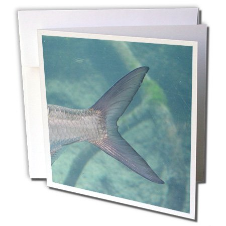 3dRose Susans Zoo Crew animals - Carp Tail In Water - 1 Greeting Card with envelope ()