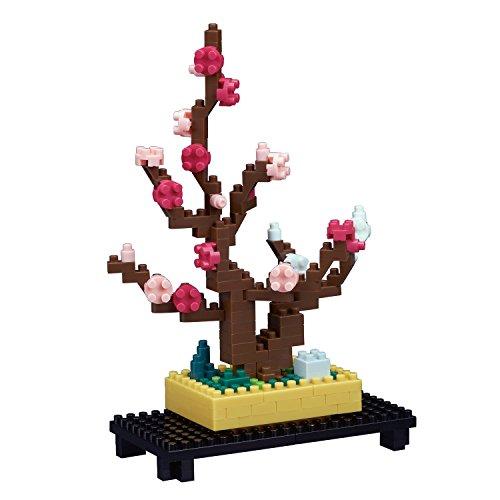 Plum Bonsai - 8