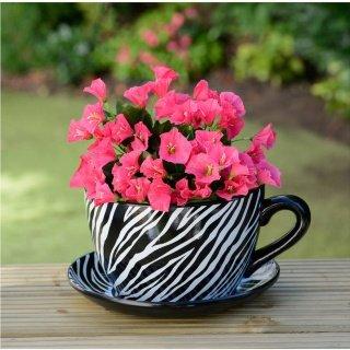 Giant Tea Cup And Saucer Planter Zebra Amazon Co Uk Garden Outdoors