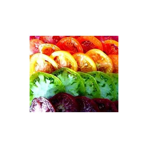 Top David's Garden Seeds Tomato Beefsteak Rainbow Seed Collection GS4050 (Multi) 500 Organic Heirloom Seeds, 10 Packs of Seeds free shipping