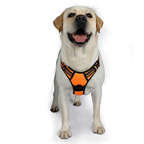Rabbitgoo Dog Harness No-Pull Pet Harness Adjustable Outdoor Pet Vest 3M Reflective Oxford Material Vest for Dogs Easy Control for Small Medium Large Dogs (Orange, XL) (Best Harness For Weimaraner)
