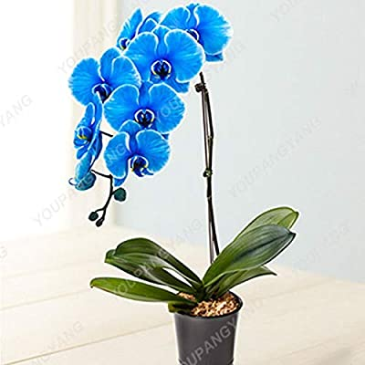 200 Pcs Orchid Bonsai High Simulation Flower Phalaenopsis Orchid Plants Phalaenopsis Orchids Bonsai in Bonsai for Home Decoratio