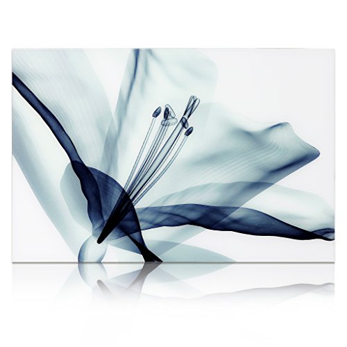Empire Art Direct ''Amaryllis'' Frameless Free Floating Tempered Glass Panel Graphic Wall Art by Empire Art Direct