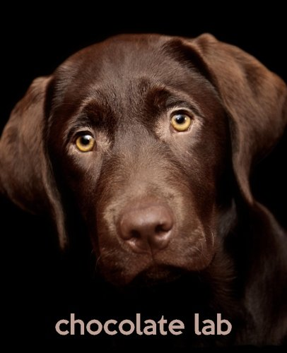 Chocolate Lab: A Gift Journal for People who Love Dogs: Chocolate Labrador Retriever  Puppy Edition (SO CUTE Puppies) (Volume ()