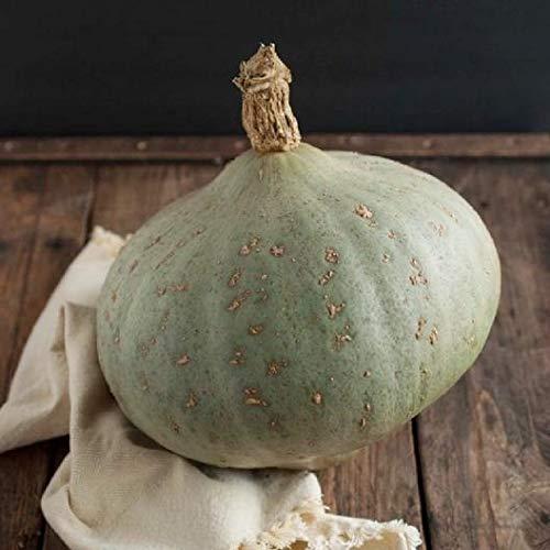 (David's Garden Seeds Squash Winter Sweet Meat SL3516 (White) 25 Non-GMO, Heirloom Seeds )