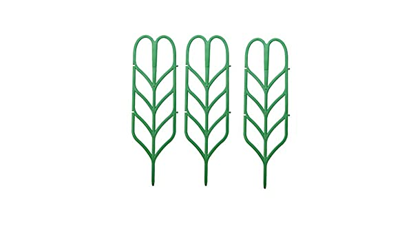 Tiansiangjjeu - Marco de Soporte para Plantas trepadoras (3 ...