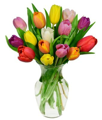 Flowers - Rainbow Tulip Bouquet - 15 Stems (Free Vase Included)