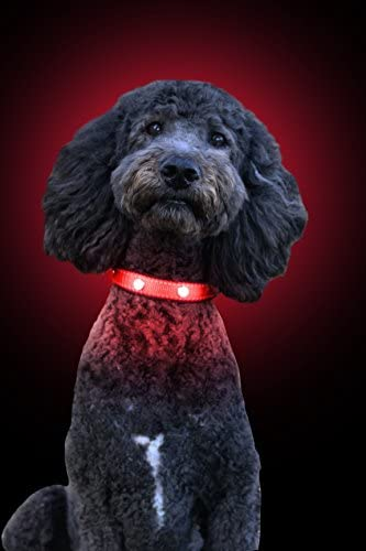 Tuff Tails LED Lightning Dog Collar – USB Rechargeable   Super Bright for Night Visibility & Safety   Durable   Waterproof   Adjustable