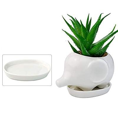 Boloniprod 1 Pcs 4 inch Elephant Plant Window Boxes White Ceramic Elephant Succulent Planter Pots/Mini Flower Plant Containers with Tray Plant Window Boxes: Garden & Outdoor