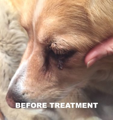 GOOD KARMA NATURALS All Natural Wart Remover for Dogs (1 oz) with Brush Cap 100% Natural Painless Dog Warts Removal Treatment 30ml from Good Karma Naturals