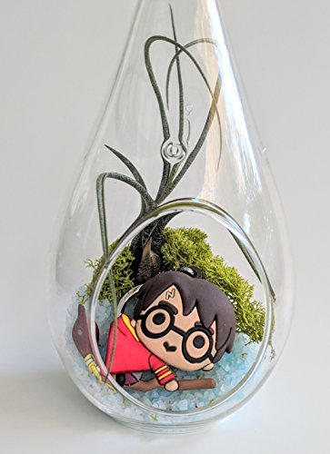Harry Potter Terrarium Kit with Harry Potter Keychain Figure 7'' Glass Teardrop Terrarium Tillandsia Air Plant Fairy Garden Custom Gift Box Thanks Happy Birthday Present by SnugLife