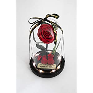 Rose in Glass Dome with Metal Engraved Plaque inspired by Beauty and the Beast Rose, Real Preserved Red Rose in Large Glass Dome with LED lights 2