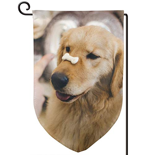 - Qayou Adult Golden Retriever with Cookie Bone On Nose Welcome Garden Flag Garden Yard Flower Decorations Double Printing Garden Flags 12 X 18 Inch